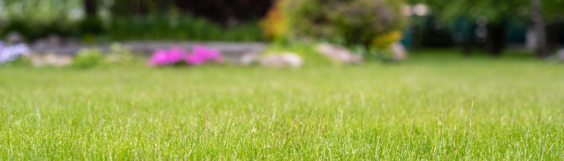Dolmar Rasenmäher: Vergleich, Empfehlung & vieles mehr
