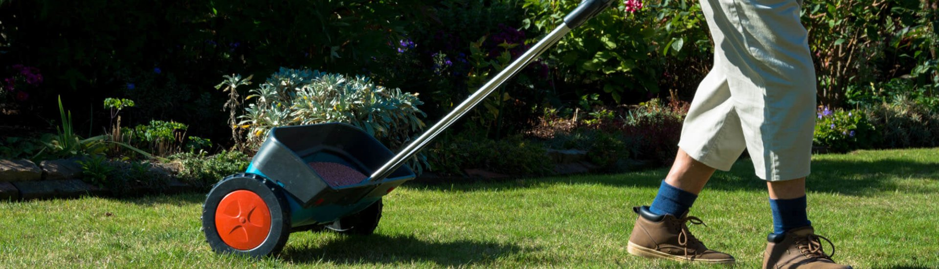 Rasen düngen: Zeitpunkt, Dünger, Häufigkeit & FAQ